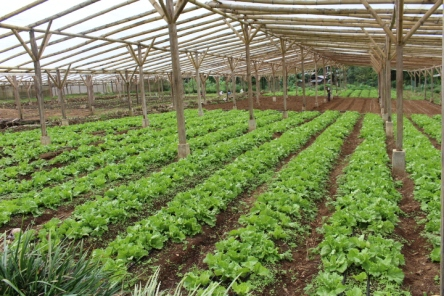 PIA Northern Mindanao - Department of Agriculture supports farm in Bukidnon9