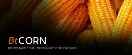bt-corn
